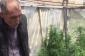 Maştağada istixanada narkotik tərkibli bitkilər becərən şəxs saxlanılıb