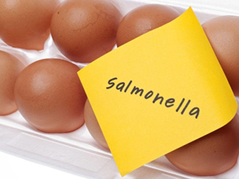 Salmonella xəstəlikləri