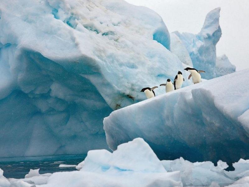 Yer kürəsi iqlim dəyişiklikləri nəticəsində 28 trilyon ton buz itirib