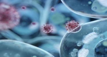 Koronavirus hüceyrələrini bu üsulla məhv etmək mümkündür