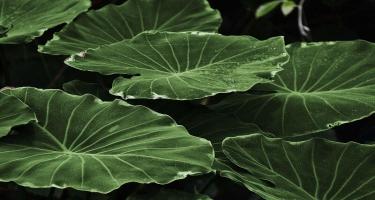 Bitkilərlə insanlar arasında ünsiyyət saxlamaq mümkündür - elmi araşdırma