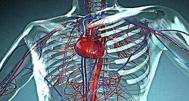 Sinir sisteminin damar xəstəlikləri