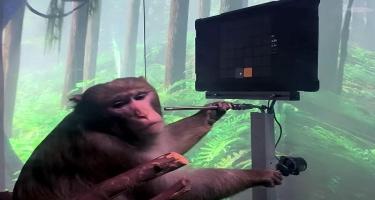 Fikir gücü vasitəsilə ping-pong oynayan meymun - VİDEO