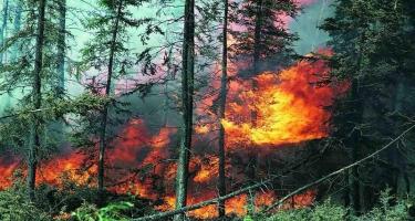 İranda meşə yanğınlarında 4 nəfər həlak olub