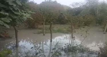 Balakənin su basmış iki kədində fəsadlar aradan qaldırılır - VİDEO
