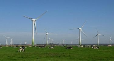 Bərpa olunan enerji planetə mənfi təsir göstərir