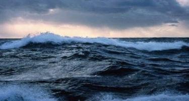 Okeanlar istiləşəndə dəniz heyvanları qütblərə doğru gedir