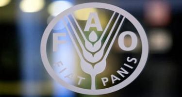 FAO Azərbaycanda pandemiyanın nəticələrinin aradan qaldırılması üçün layihələr həyata keçirməyi planlaşdırır