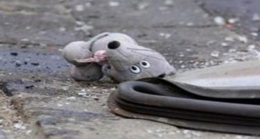 Nərimanov rayonunda ana və azyaşlı övladını maşın vurdu