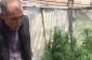 Maştağada istixanada narkotik tərkibli bitkilər becərən şəxs saxlanılıb (FOTO)