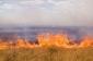 Biləsuvarda biçilməmiş taxıl sahəsi yanıb