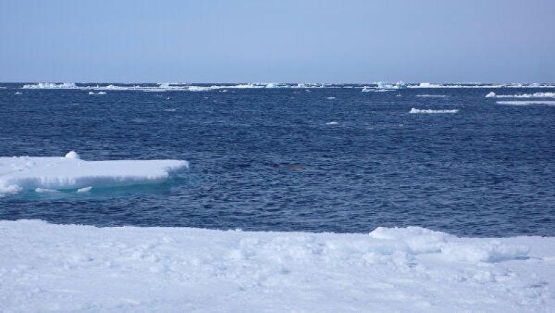 Finlandiya və İslandiyanın baş nazirləri Arktikanın inkişafını müzakirə edəcəklər