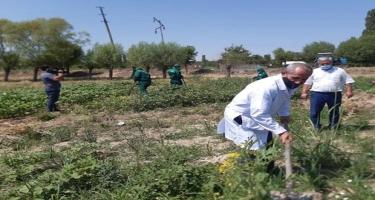 AQTA əməkdaşları əkin sahələrində fitosanitar müşahidələr aparıblar