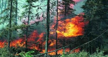ETSN: Meşələrdə yanğın halları azalıb