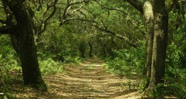 Meşələrlə bağlı ən problemli rayonların adları açıqlandı