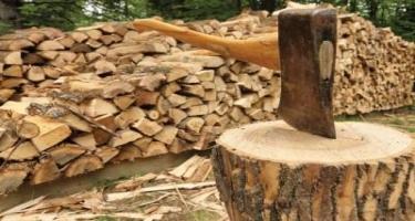 ETSN: Odunun bir kub metrinin 15 manata satılması nəzərdə tutulur