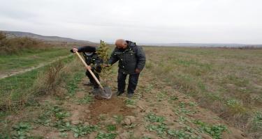 Qubadlıda Şərq çinarları əkildi, tut bağı salındı (FOTO)