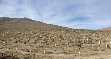 Zəngilanda növbəti dəfə 400 tut ağacı əkildi