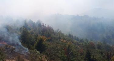 Hirkan Milli Parkında baş verən yanğın lokallaşdırıldı