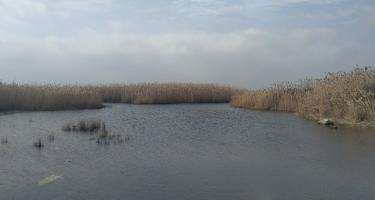 Qızılağac Milli Parkında qanunsuz balıq ovuna qarşı reyd keçirilib (FOTO)