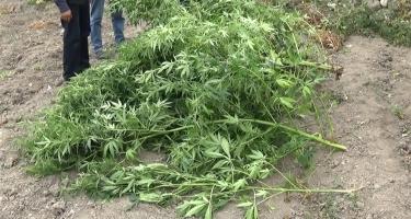 Qubada narkotik maddələrin qanunsuz dövriyyəsi ilə məşğul olan şəxslər saxlanılıb (FOTO)