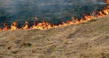 Yeni Ramanada 2 hektar quru ot sahəsi və 50 ədəd şam ağacı yanıb (YENİLƏNİB)