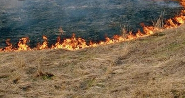 Şəkidə 200 hektar sahədə yanğın olub