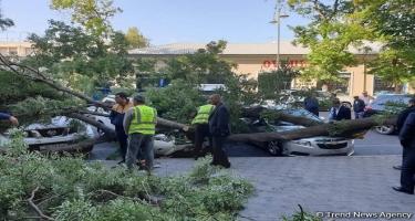 Yasamalda ağacın budaqları qırılaraq dayanacaqda 3 nəfərin üstünə düşüb