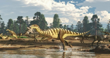 Tailandda yeni dinozavr növü tapıldı
