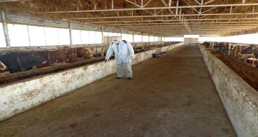 DBX təsərrüfatlarda baytarlıq-sanitariya qaydalarına ciddi əməl olunmasını tövsiyə edir