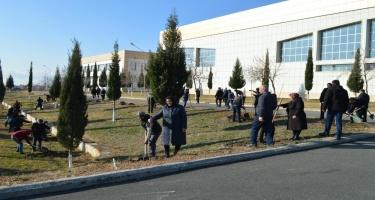 Balakəndə Eldar şamı, Xan çinarı və digər növ ağac tingləri əkilib (FOTO)