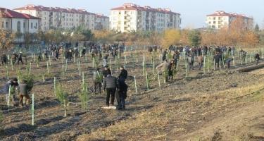 Yevlax: genişmiqyaslı kampaniya zamanı minlərlə ağac əkilib (FOTO)
